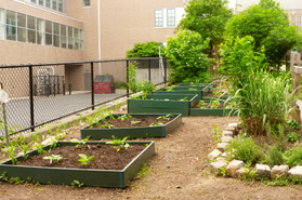 Straight from School Gardens to Lunchrooms: Delicious or Dangerous?