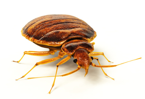 Bed Bugs in Schools? The Creepy Truth
